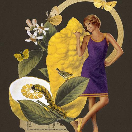 1-Obstsaison-Zitrone